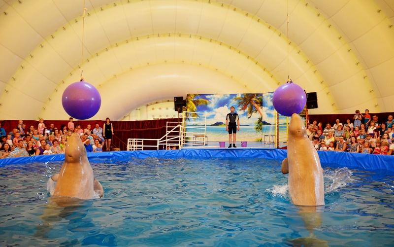 У нас в гостях российский дельфинарий!